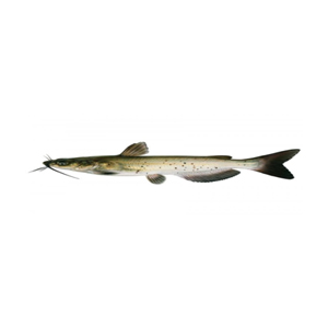 Welcome to RAS Fishery